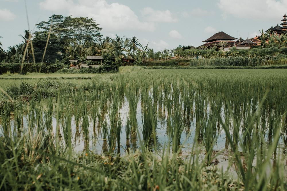 Bali (5 von 43).jpg