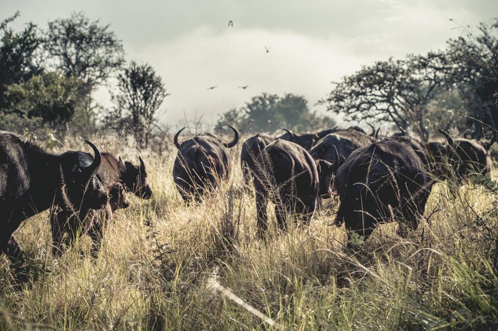 Ruanda chris frumolt 2015-3.jpg