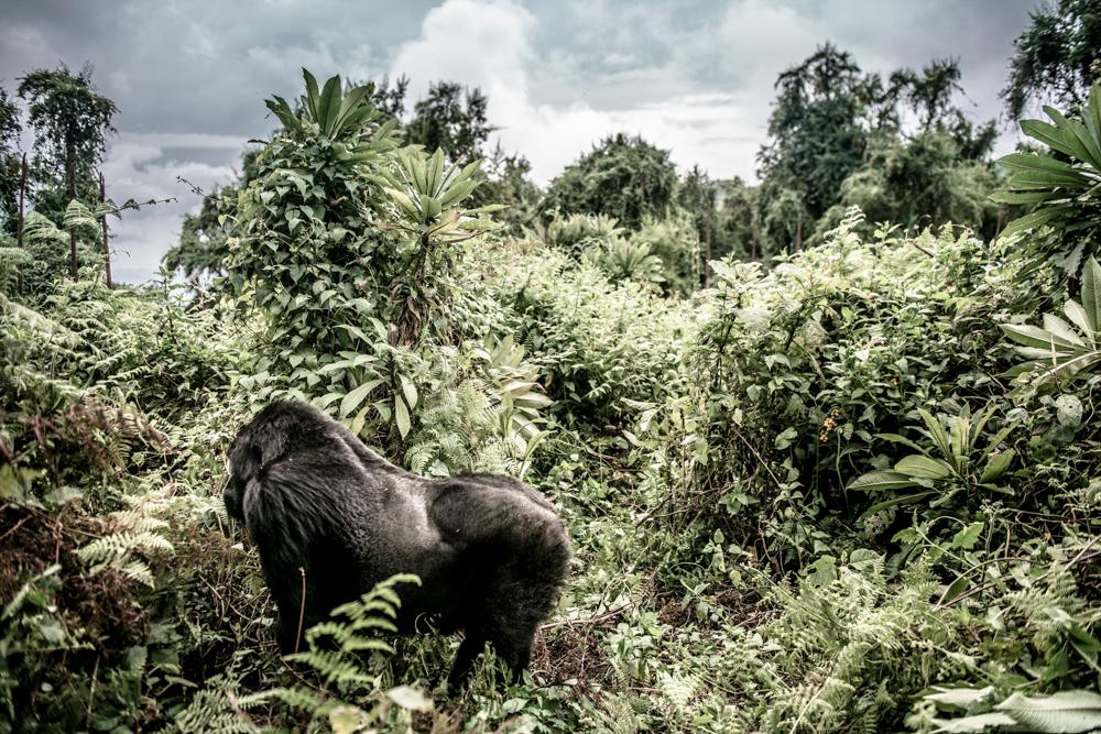 Ruanda chris frumolt 2015-45.jpg