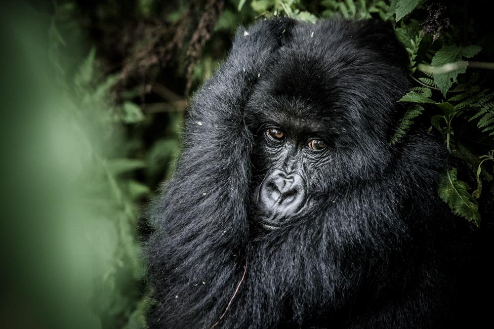 Ruanda chris frumolt 2015-46.jpg