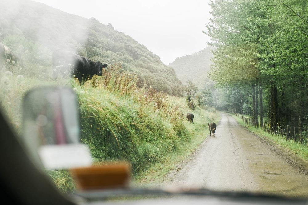 Neuseeland_DieHochzeitsfotografen_05.jpg