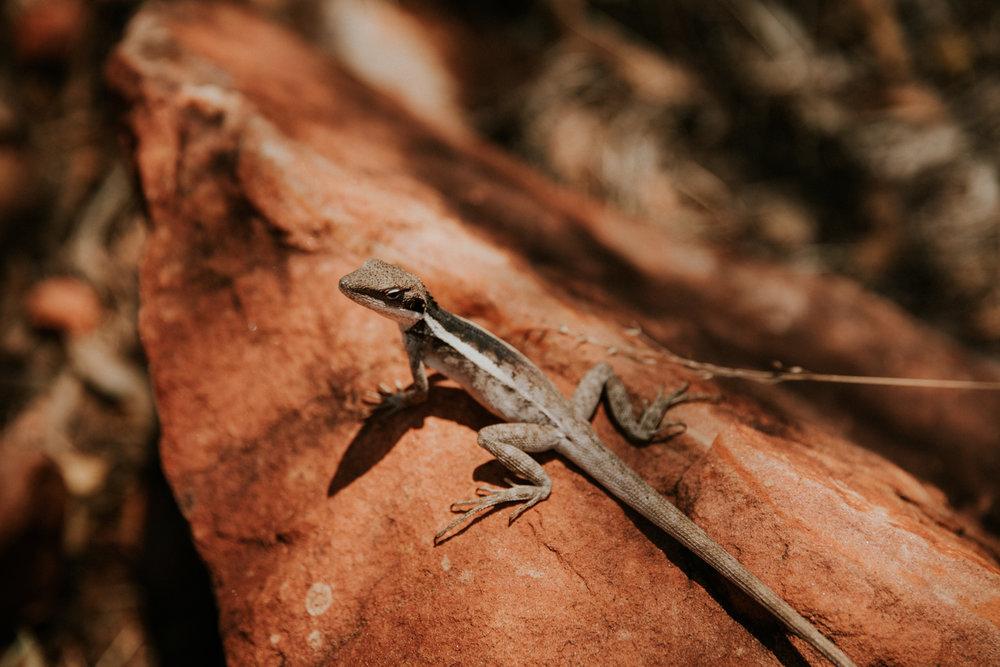Outback(105von211).jpg
