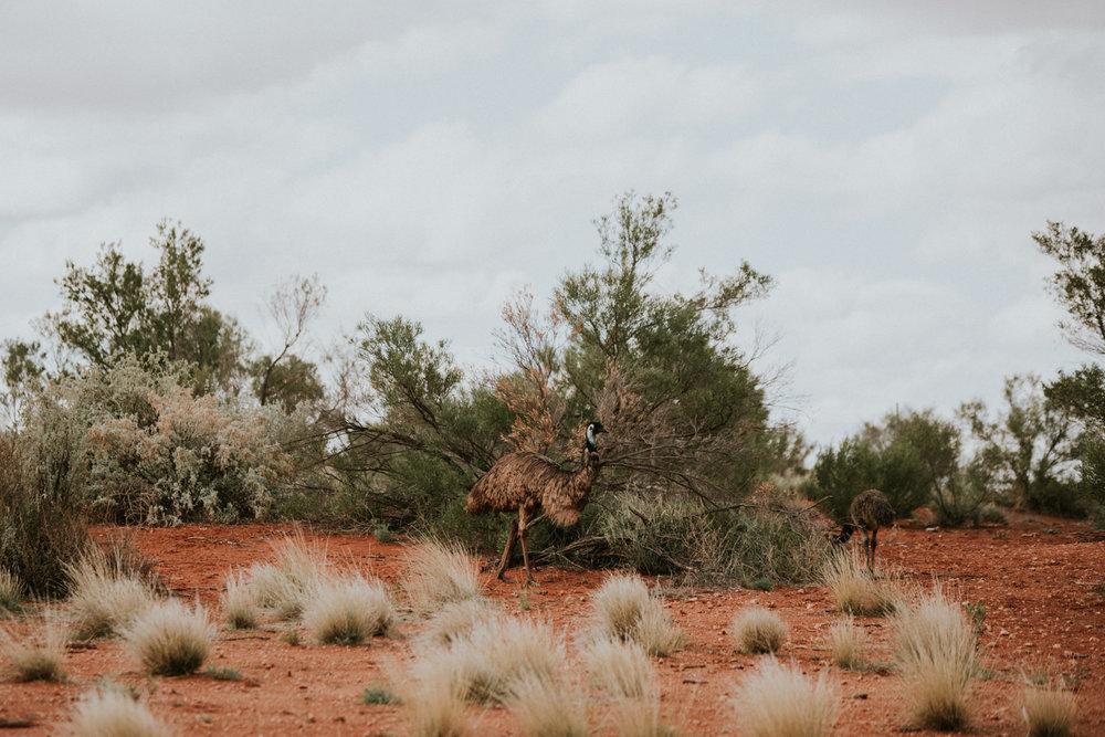 Outback(163von211).jpg