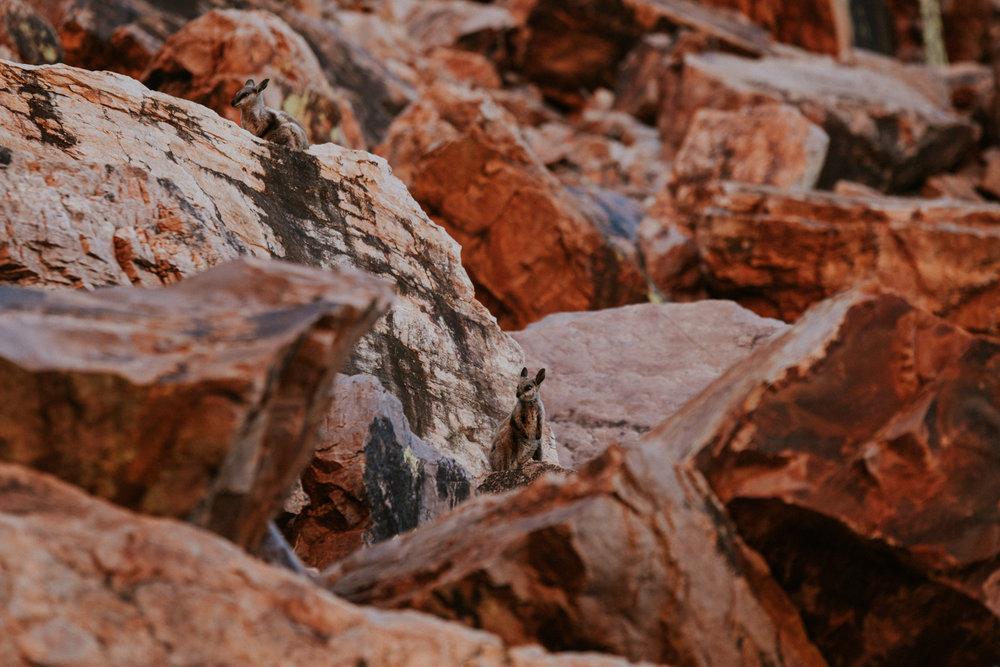 Outback(203von211).jpg