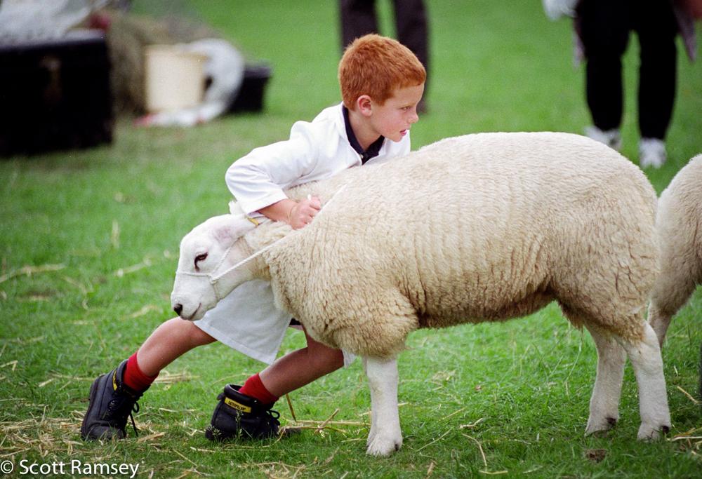 Boy With Sheep At Fair