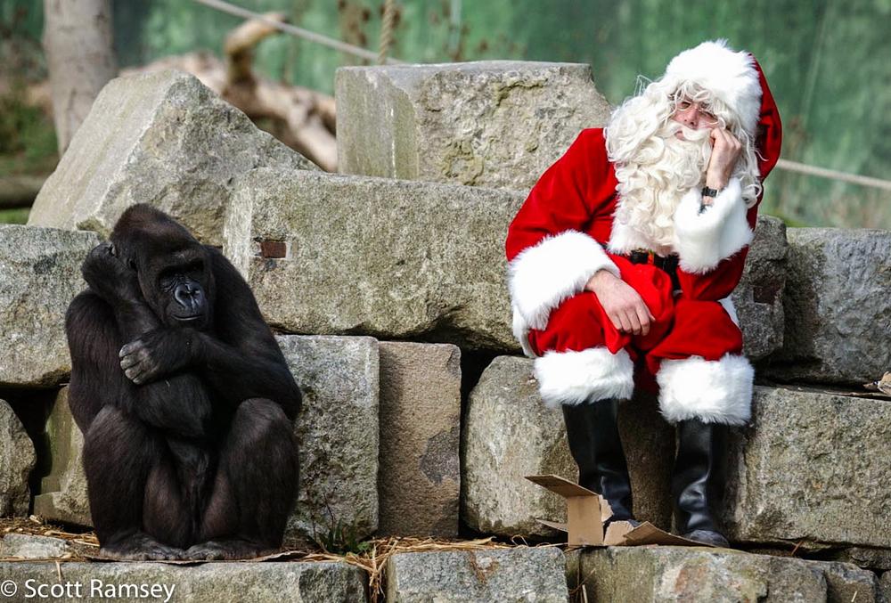 Gorilla Santa Kent