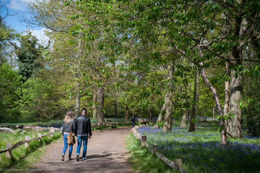 Visitors walk along a path passing a carpet of bluebells in the grounds of Kew Gardens on a sunny bring day.