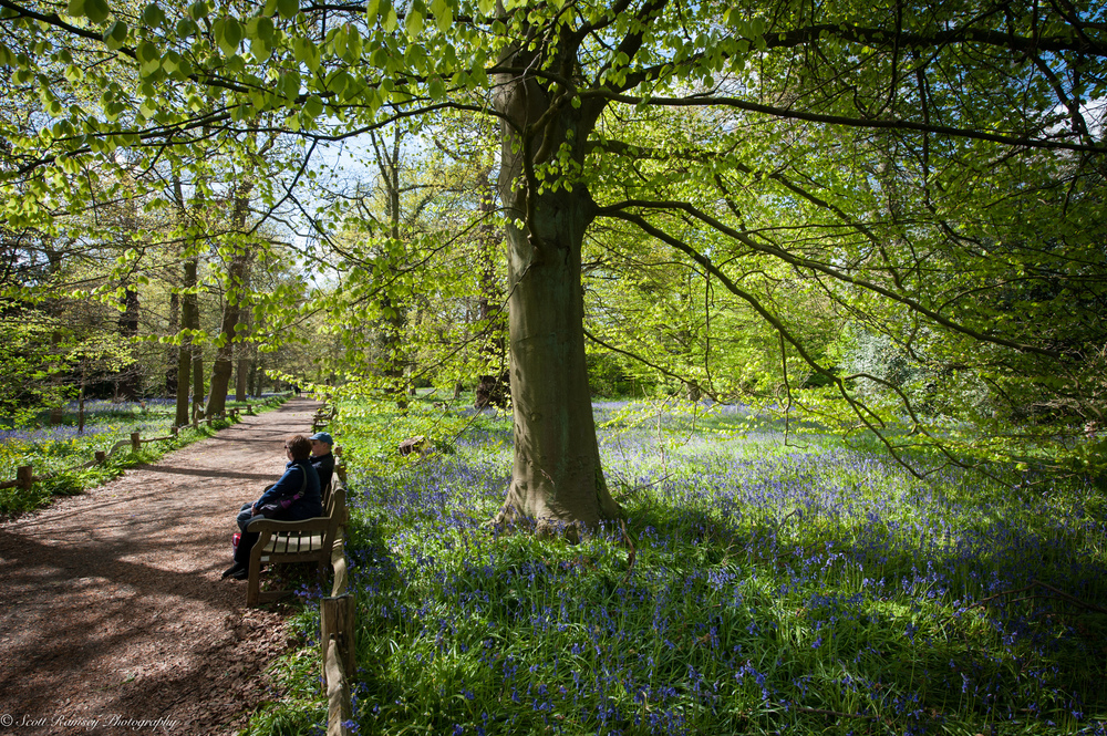Visitors to Kew Gardens enjoy a sunny spring day and carpet of bluebells.