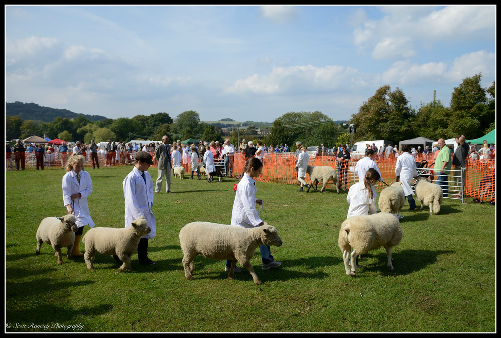 Children parade sheep around the main arena as the judging takes place at the Findon Sheep Fair in West Sussex.