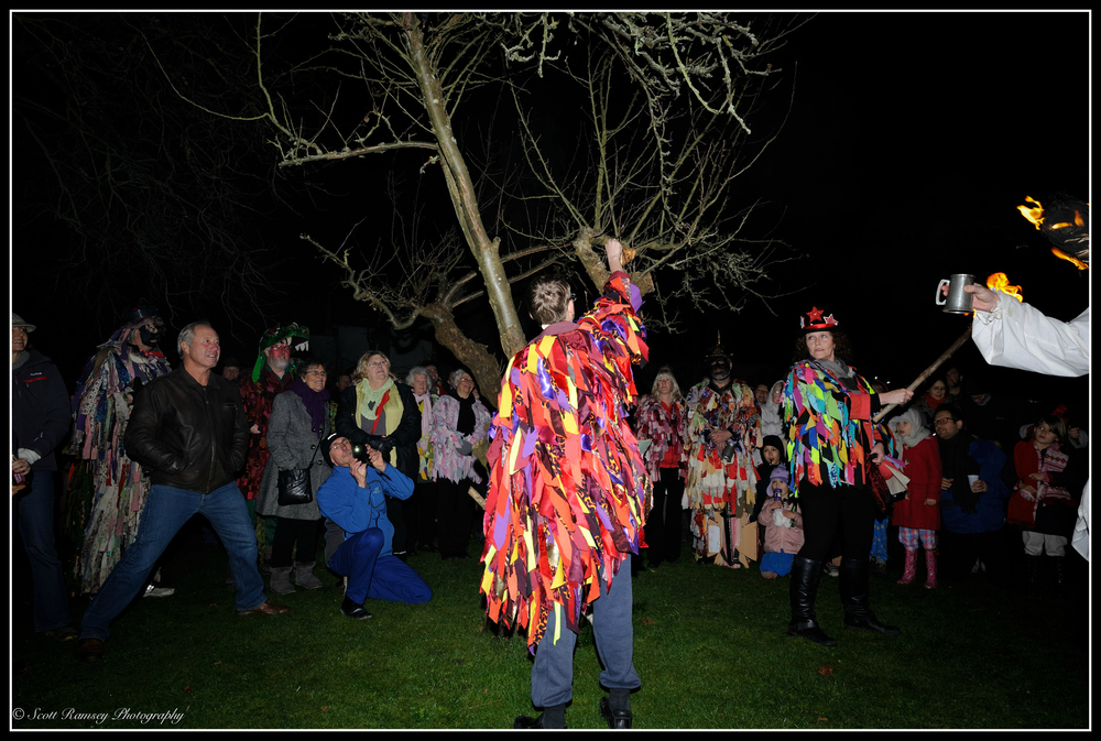 During the Wassail in Tarring village,  toast is placed in the branches of a tree for winter robins to eat and carry off any bad spirits.