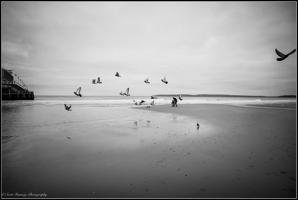 Birds take flight as a father and son play on the beach in Bournemouth, England. Photo © Scott Ramsey