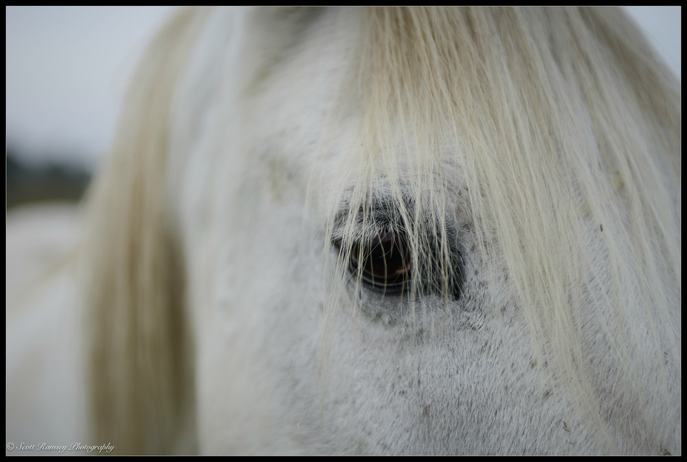 Here's looking at you, kid - A horse stands in a field Pagham Harbour, West Sussex, England. Photo © Scott Ramsey