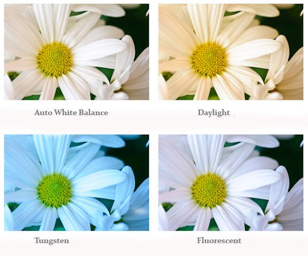 flowers, white balance
