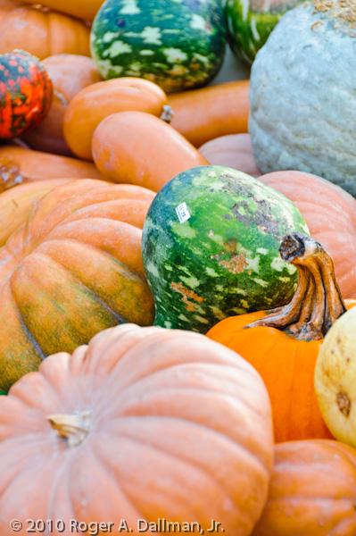 fall, gourds, pumpkin, color,