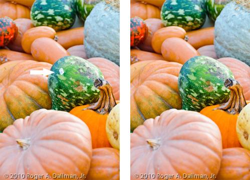gourd, alteration, pumpkin