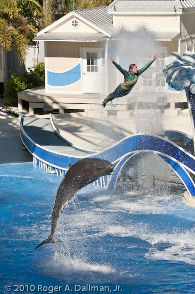 Sea World swimmer leaps with dolphin.