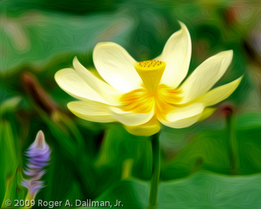 A lotus flower from Va Beach, VA, altered with Pixel Bender.