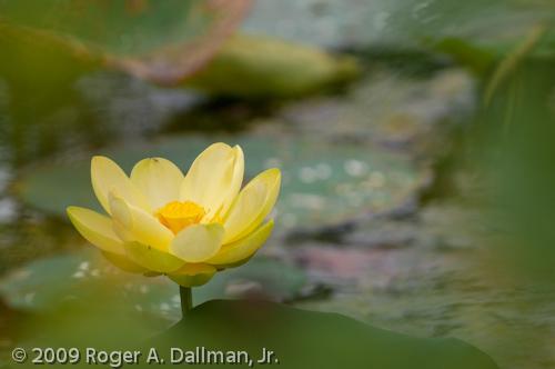 lily in Virginia Beach, VA, USA