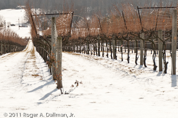 The vineyards of northern Virginia, covered in snow.