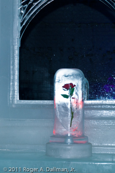 Rose at the Aurora Ice Bar, Chena Springs, Alaska