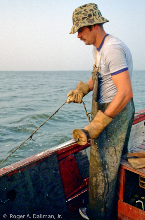 Fisherman in Back Bay, Virginia Beach, Virginia