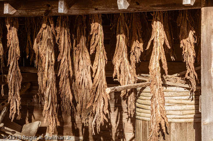 tobacco hanging in a shed at George Washington's birthplace, in Westmoreland County, VA