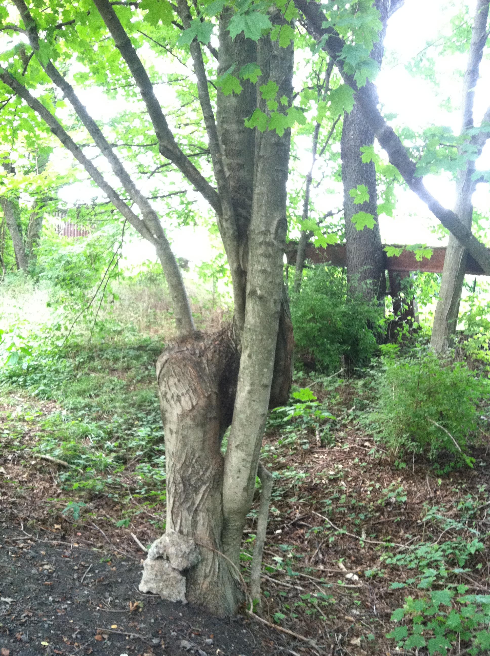 Virginia Creeper Trail 2a