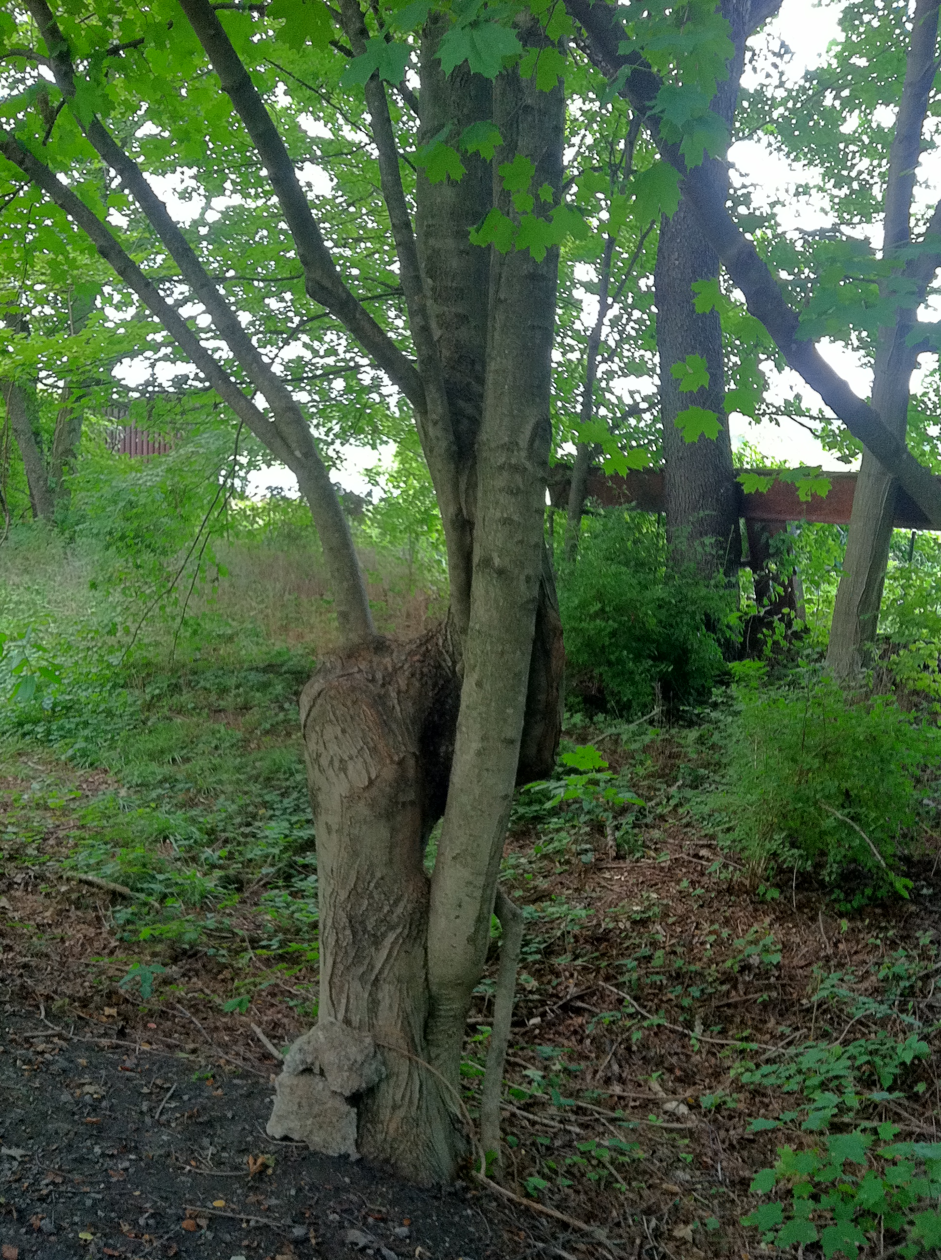 Virginia Creeper Trail 2b