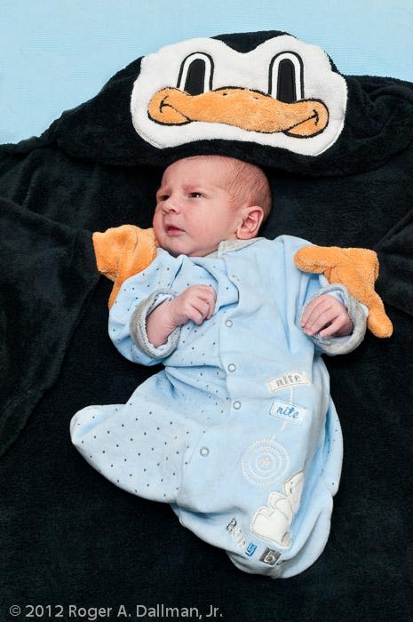 Penguin babysitter?