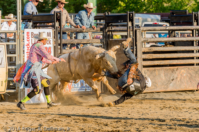 Bull riding in Fauquier County can be rough