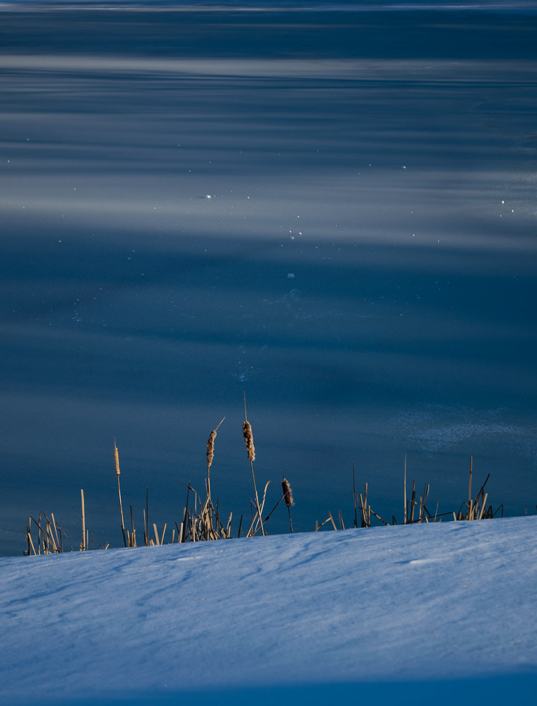 Winter weeds. Photo by Robyn Wiencko