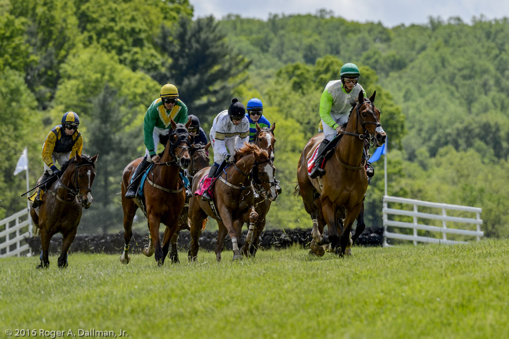 horse race 48553