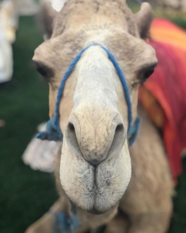 Meet my new friend! Hello from Marrakech!