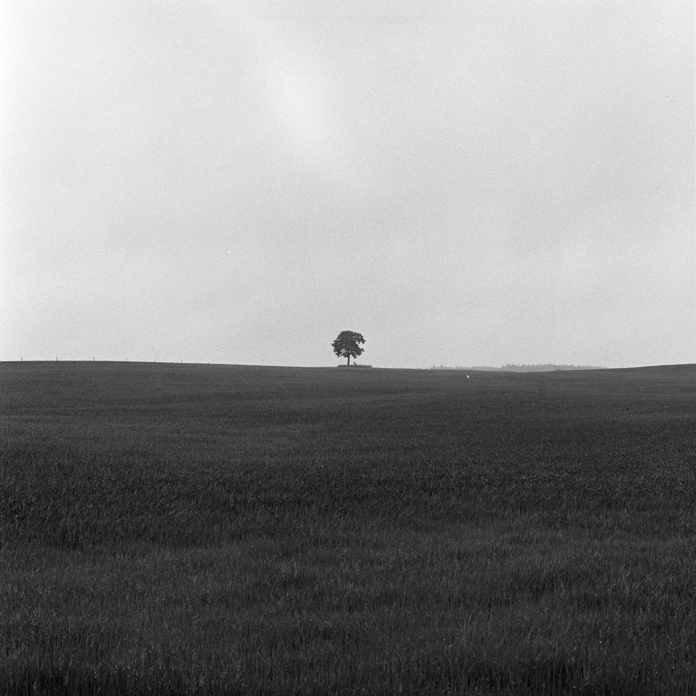 TreeB&W.jpg