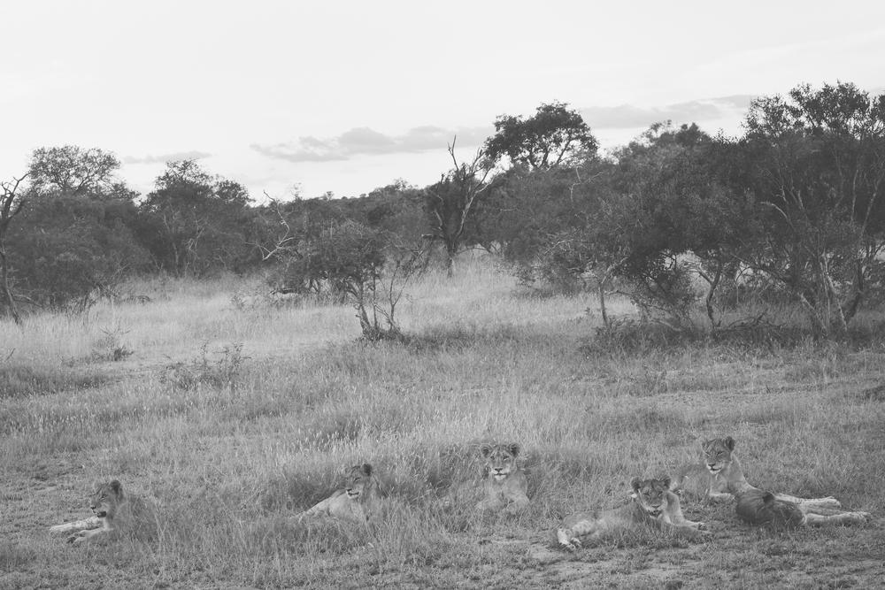 l'afrik_safari-3.jpg