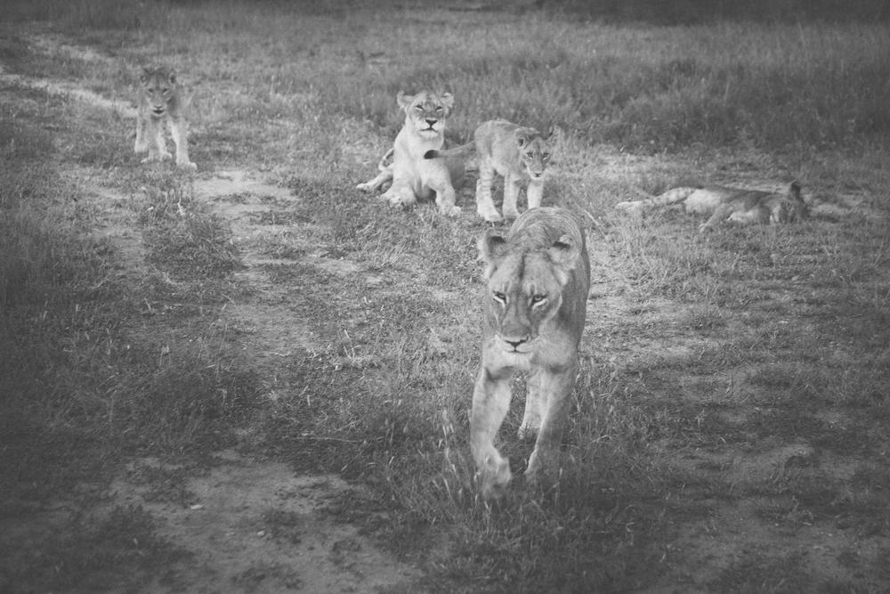 l'afrik_safari-9.jpg