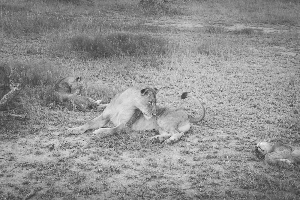 l'afrik_safari-6.jpg