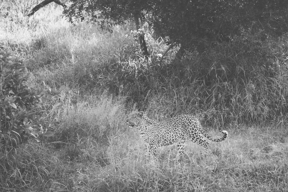 l'afrik_safari-1.jpg