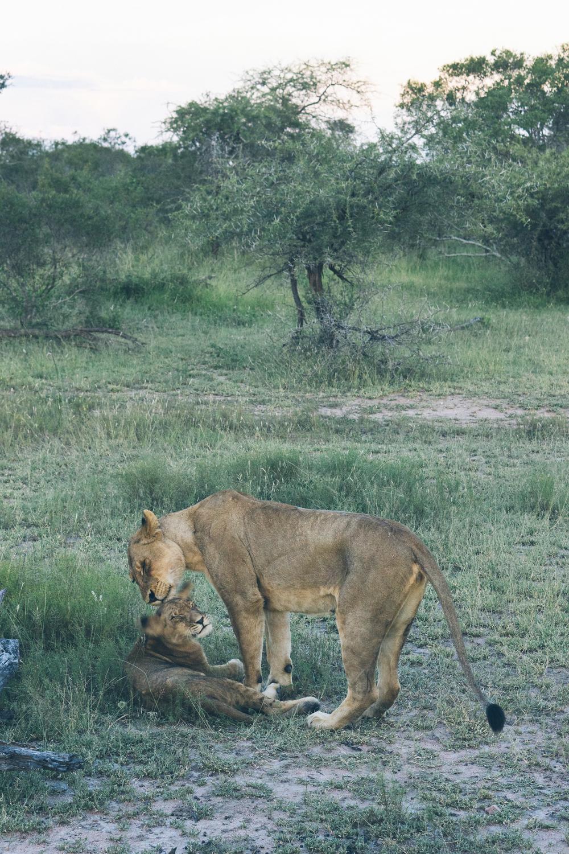l'afrik_safari-8.jpg
