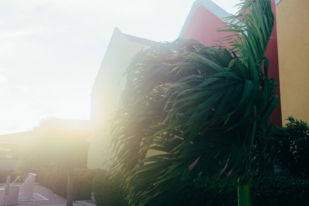 Palms sway in the tropical breeze.