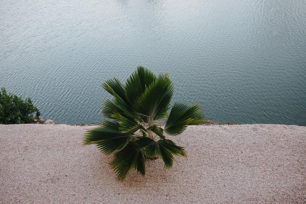 Lone palm outside my window.