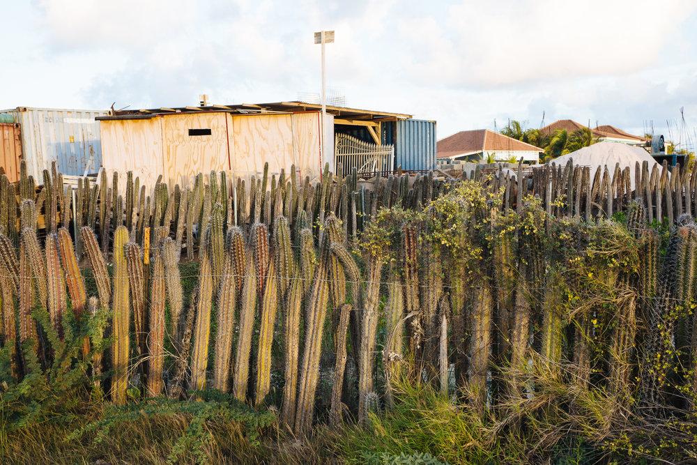 Cactus fences!