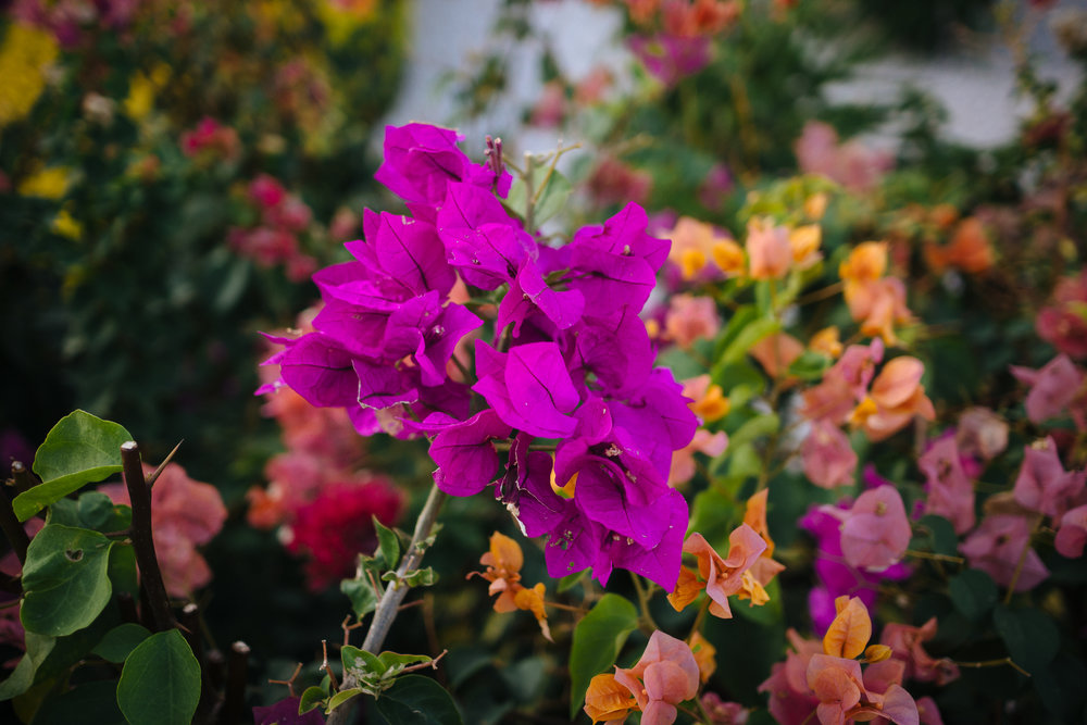 Colorful flowers are everywhere.