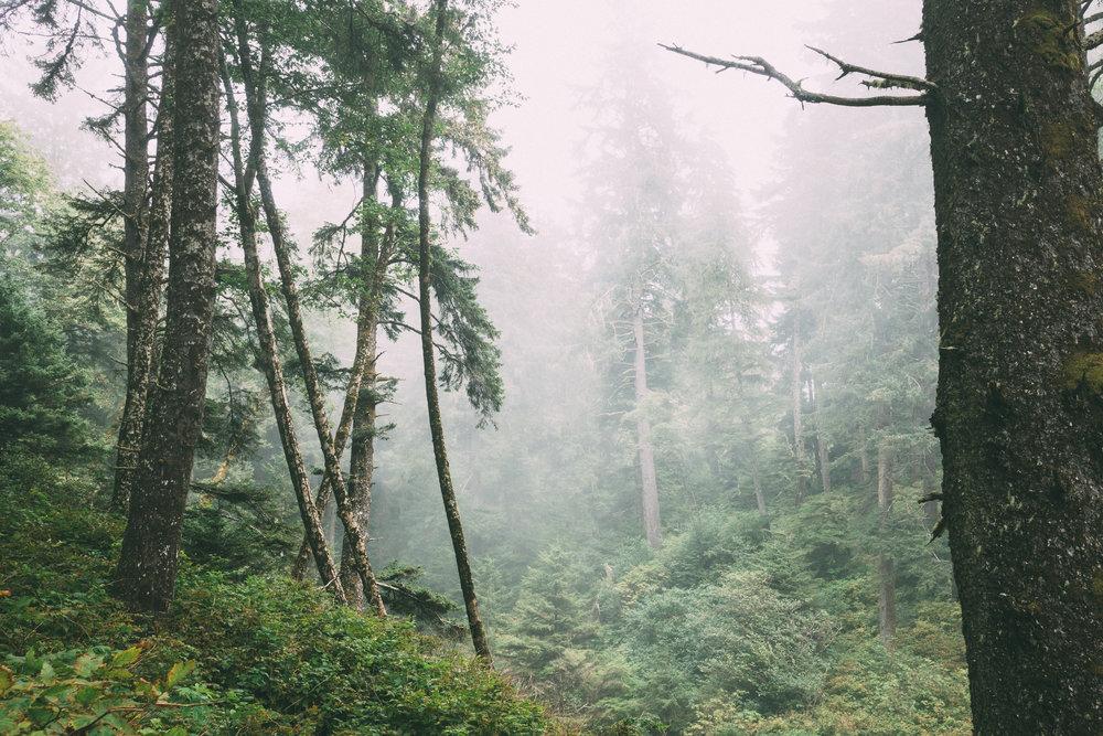 rainier-4.jpg