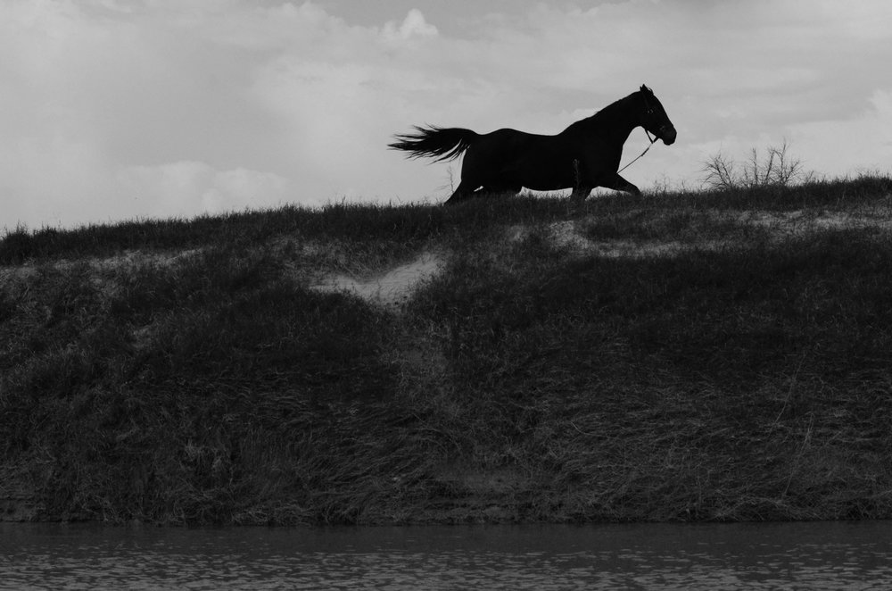A black mare runs free on the Mexican side on the Rio Grande. (Border Wall Series)