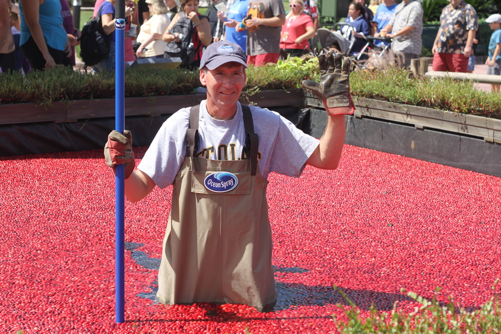 Ocean Spray cranberry bog.