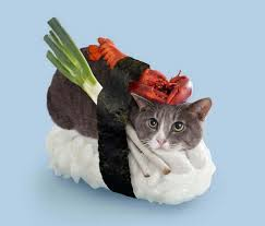 Magical Sushi & Cats