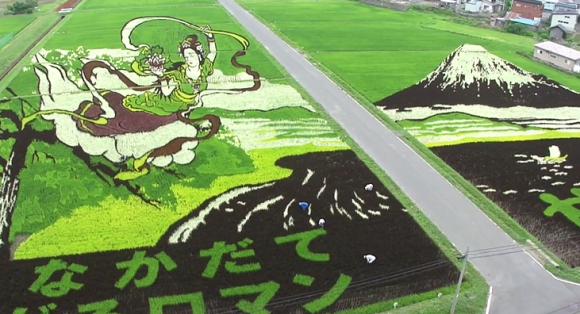 Amazing Rice Paddy Art