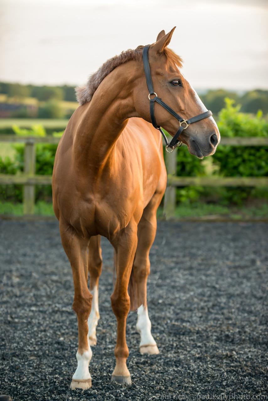 Lordy Horse.jpg