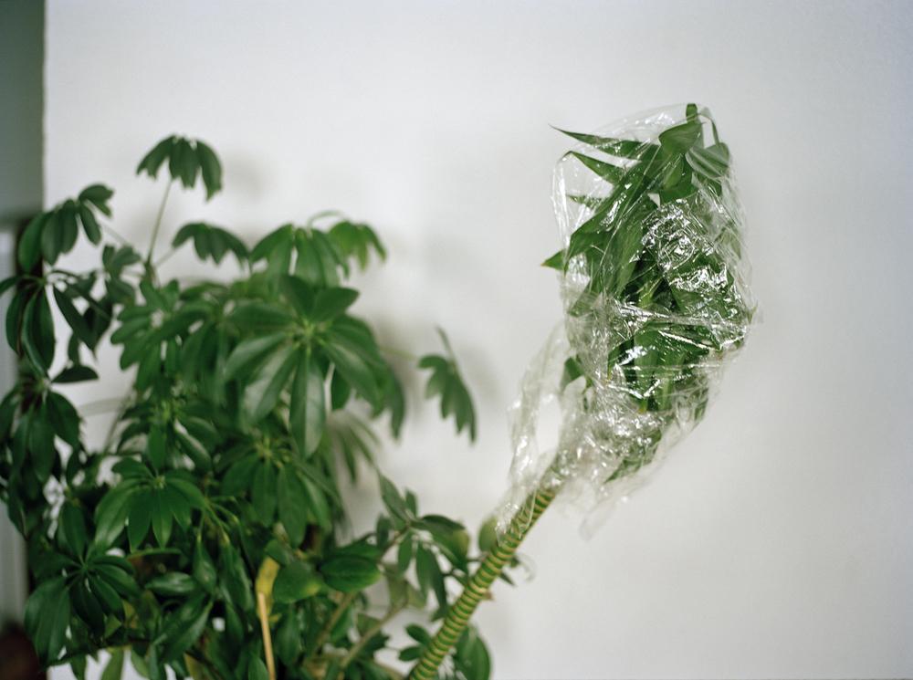 plasticwrapplantwebsite.jpg